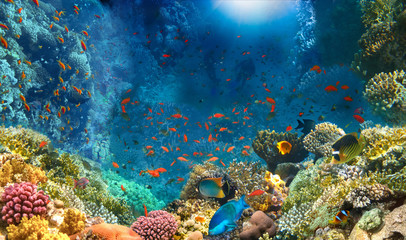 Tuinposter Koraalriffen Group of scuba divers exploring coral reef. Underwater sports and tropical vacation concept