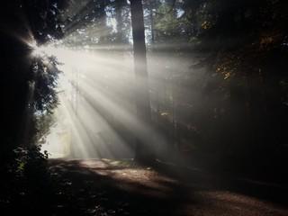 Scenic View Sunbeam Passing Through Trees