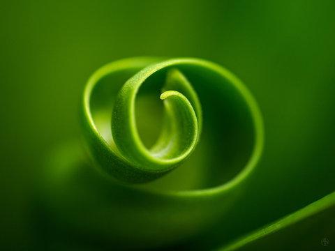 Close-up Of Curled Leaf