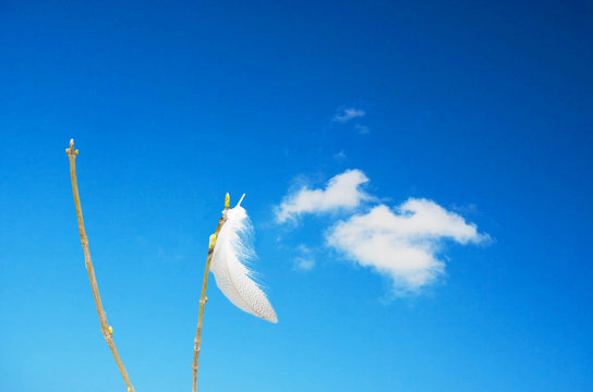 Low Angle View Of White Feather On Plant Stem Against Blue Sky