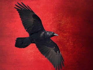 Digital Composite Image Of Raven Flying Against Red Wall