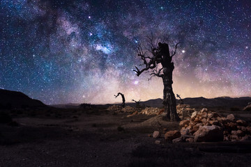 Milky way with lonely tree in dark night