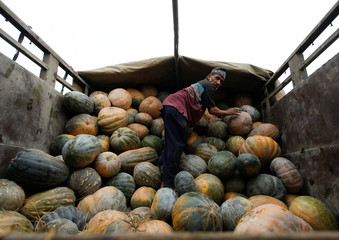 A labourer unloads pumpkins from a truck at a vegetable market during May Day, amid the lockdown imposed by the government over concerns about the spread of the coronavirus disease (COVID-19) outbreak, in Kathmandu