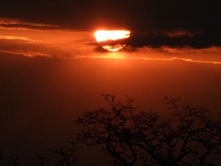 Autocollant pour porte Marron Słońce