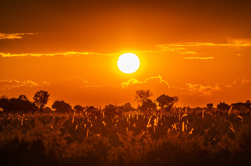Photo sur Toile Rouge mauve Botswana landscape during beautiful orange sunset showing the land in all its natural beauty