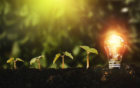 Green plants grows and lightbulb. Energy saving, Earth Day and saving concept.