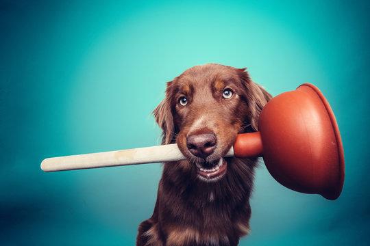 Hund mit Pümpel