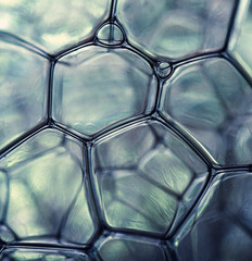 Bubbles forming a honeycomb pattern