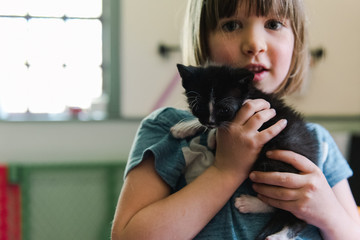 stock photo of adorable little girl holding a kitten in her hands