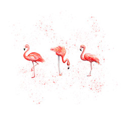 Printed roller blinds Flamingo Aquarelle painting of flamingo sketch art pattern illustration