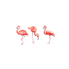 Photo on textile frame Flamingo Aquarelle painting of flamingo sketch art pattern illustration