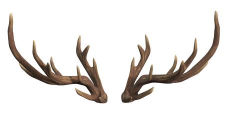 Deer antlers isolated on white 3d rendering