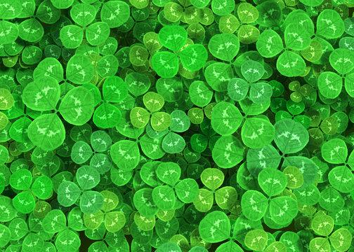 Green clover background 3d rendering