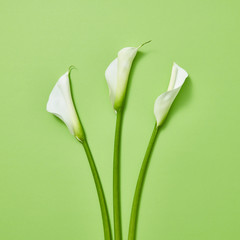 Calla lilies on a green background.