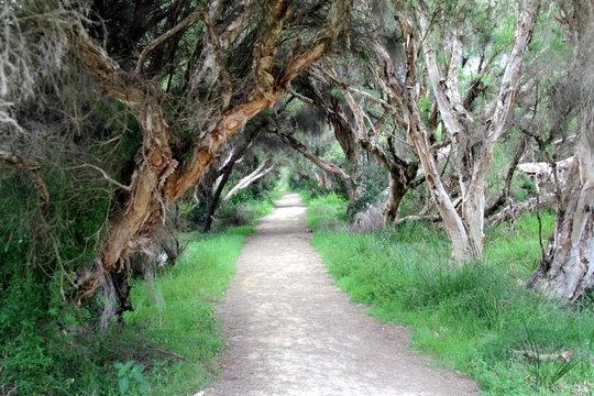 Weg unter alten Bäumen