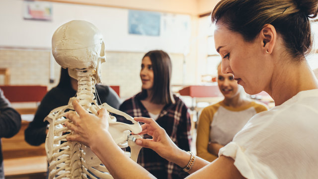 Teacher explaining the skeletal system to group of students