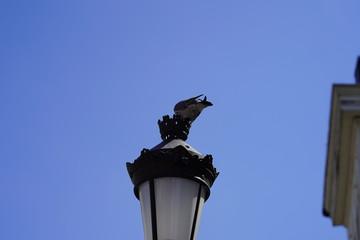 street photography  covid-19 corona virus Belgium