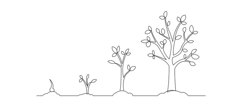 Continuous line drawing of step of tree growth. Vector illustration