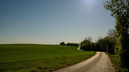 Fototapeta road in the field