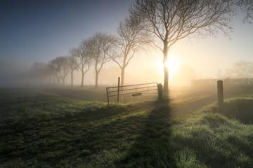 Wall Mural - misty morning sunrise