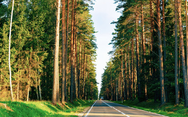 Wall Murals Road in forest Scenery of road in forest in Poland reflex
