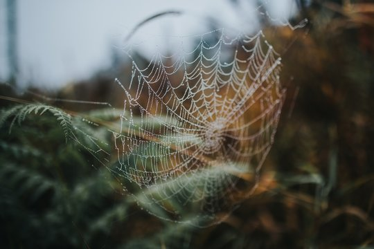 Beautiful macro picture of a spider's web in a forest