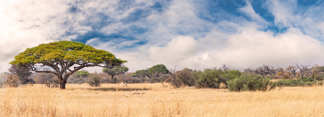 Spoed Fotobehang Beige African landscape in the Hwange National Park, Zimbabwe