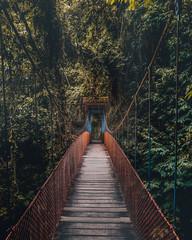 Wall Murals Road in forest Selva Perú - Jungle Peru