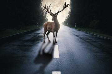 Hirsch steht auf einer Straße im Wald mit Mond im Hintergrund
