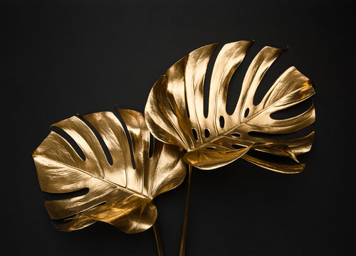 Closeup view of two luxurious golden painted tropical monstera leaves artistic composition on abstract black background isolated