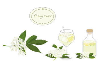 Elderflower illustration set- isolated, editable vector graphic