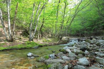 Photo sur Aluminium Rivière de la forêt 森の中の小川(the river in forest)
