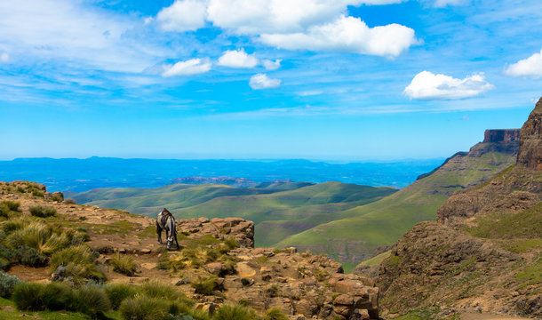 Panoramic view of Drakensberg mountains, horses in foreground. Near sani pass lesotho