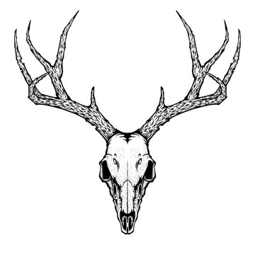 deer skull vector illustration for tattoo, printing on t-shirts, posters and other items. animal skeleton drawing. wildlife tattoo symbol design.