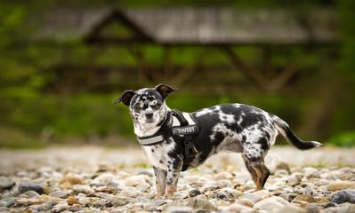 hund, tier, haustier, weiß, black, canino, welpe, hübsch, säugetier, breed, portrait, g Fotobehang