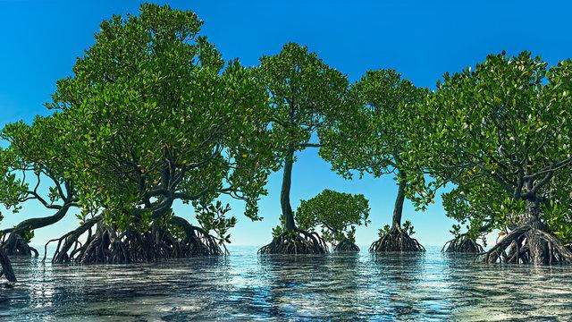 Red mangroves on Florida coast 3d rendering
