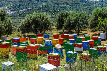 Meadow with olive trees and colorful wooden beehives.