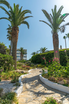 Walk along the alleys on the tropical shore during a hot summer day.