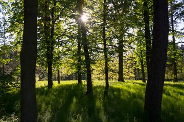 Obraz drzewa w parku pod słońce - fototapety do salonu