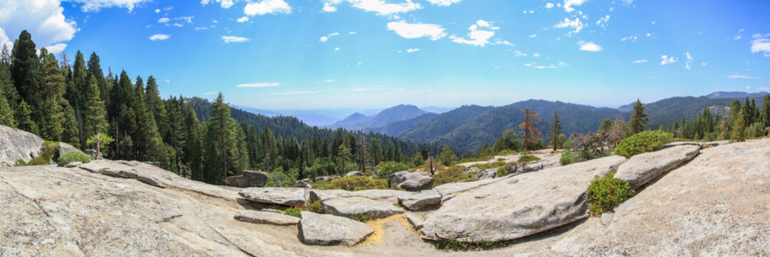 Dramatic landscape of Sequoia National Park, USA, with forest and granite rocks, Panorama