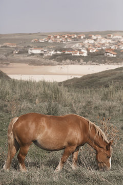 little horse on the beach in north Spain