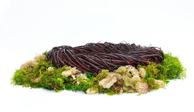 Fantasy Nest Background Photo Prop with green moss Isolated on white background.