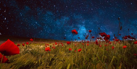 Poppy Fields under a starry night.