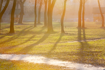 Autumn city park. The rays are salty. The shadow of the trees. Fog
