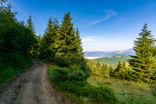 forest on the grassy meadow in mountains. beautiful sunny landscape with distant valley full of fog. amazing morning scenery