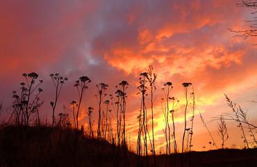 Foto auf Gartenposter Koralle Silhouette Plants On Landscape Against Sky During Sunset
