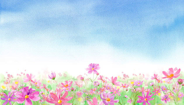 よく晴れた日の満開のコスモス畑の風景、水彩イラスト