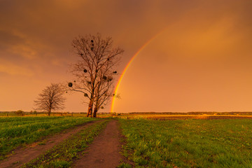 Rainbow over stormy sky. Rural landscape with rainbow over dark stormy sky in a countryside at summer day.