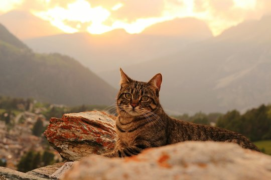 Portrait Of Cat Sitting Against Mountains During Sunset
