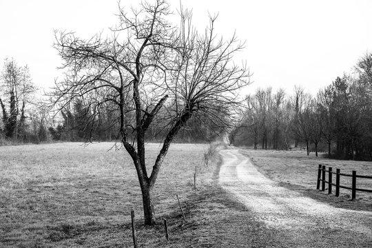 Tree in the field near a footpath.